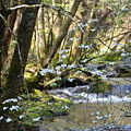 Springtime Stream In The Smokies by Thomas Cannon