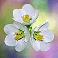 Springtime Triplets By Kaye Menner by Kaye Menner
