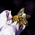 Springtime Visitor by Jutta Maria Pusl
