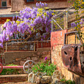 Springtime Wisteria In Old Bisbee by Charlene Mitchell