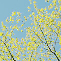 Sprint Blossom  by Maria isabel Villamonte