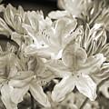 Sprint Flowers B/w 1 by Tina Marie