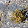 Sprouting Rock by Eric Rosenwald