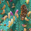 Spruce Cones by Sharon Talson