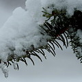 Spruce Needles And Ice by Betty-Anne McDonald