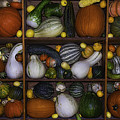 Squash And Gourds In Compartments by Garry Gay