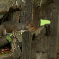 Squatting Squirrel by Travis Rogers