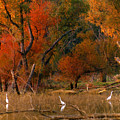 Squaw Creek Egrets by Steve Karol