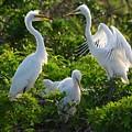 Squawk Of The Great Egret by Patricia Twardzik