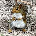 Squirrel 2 by J M Farris Photography