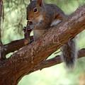 Squirrel 2 by Joyce StJames