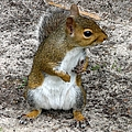 Squirrel 3 by J M Farris Photography