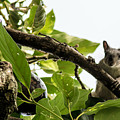 Squirrel 3 by Totto Ponce