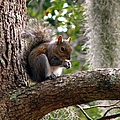 Squirrel 7 by J M Farris Photography
