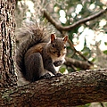 Squirrel 8 by J M Farris Photography