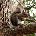 Squirrel 9 by J M Farris Photography