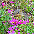 Squirrel Among Coreopsis In Huntington Gardens In San Marino-california   by Ruth Hager