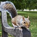 Squirrel Bench by Agusti Pardo Rossello