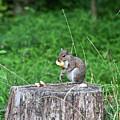 Squirrel Having Lunch by Rodney Cammauf