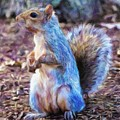Squirrel - Id 16218-130716-8114 by S Lurk