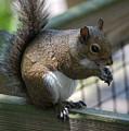 Squirrel II by Robert Meanor