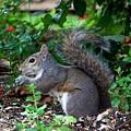 Squirrel IIi by Jai Johnson