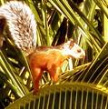 Squirrel In Palm Tree by Glenn Aker