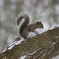 Squirrel In The Snow by Ty Shults