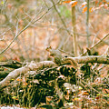 Squirrel In The Woods  by John McGraw