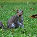Squirrel Iv by Jai Johnson