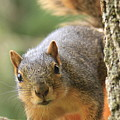 Squirrel Look by Krista Kulas