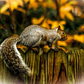 Squirrel by Ola Allen