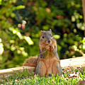 Squirrel On A Log by Robert Brown