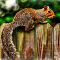 Squirrel On Fence by Ola Allen