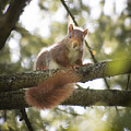 Squirrel On The Spot by Stwayne Keubrick