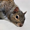 Squirrel by Paulette Thomas
