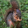 Squirrel Portrait # 3 by Marcus Dagan