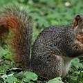 Squirrel Portrait # 6 by Marcus Dagan