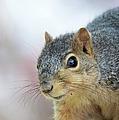 Squirrel Portrait by Bonfire Photography