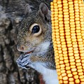 Squirrel Portrait by Jai Johnson