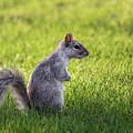 Squirrel Profile by Cristina Stefan