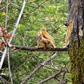 Squirrel Standoff by William Tasker