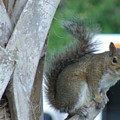 Squirrel by Tommy Baker