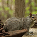Squirrel With Anchor by Steven Natanson