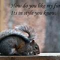 Squirrel With Fur Collar by Douglas Barnett