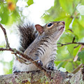 Squirrel With Personality by Kenneth Albin