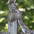 Squirrelly Affection by Angie Vogel