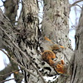 Squirrels At Play Vertically by Angela Rath