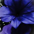 Squish Blossom by Heather Joyce Morrill