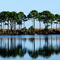 St Andrews State Park by Randy J Heath